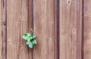 virutalia.com foto 6